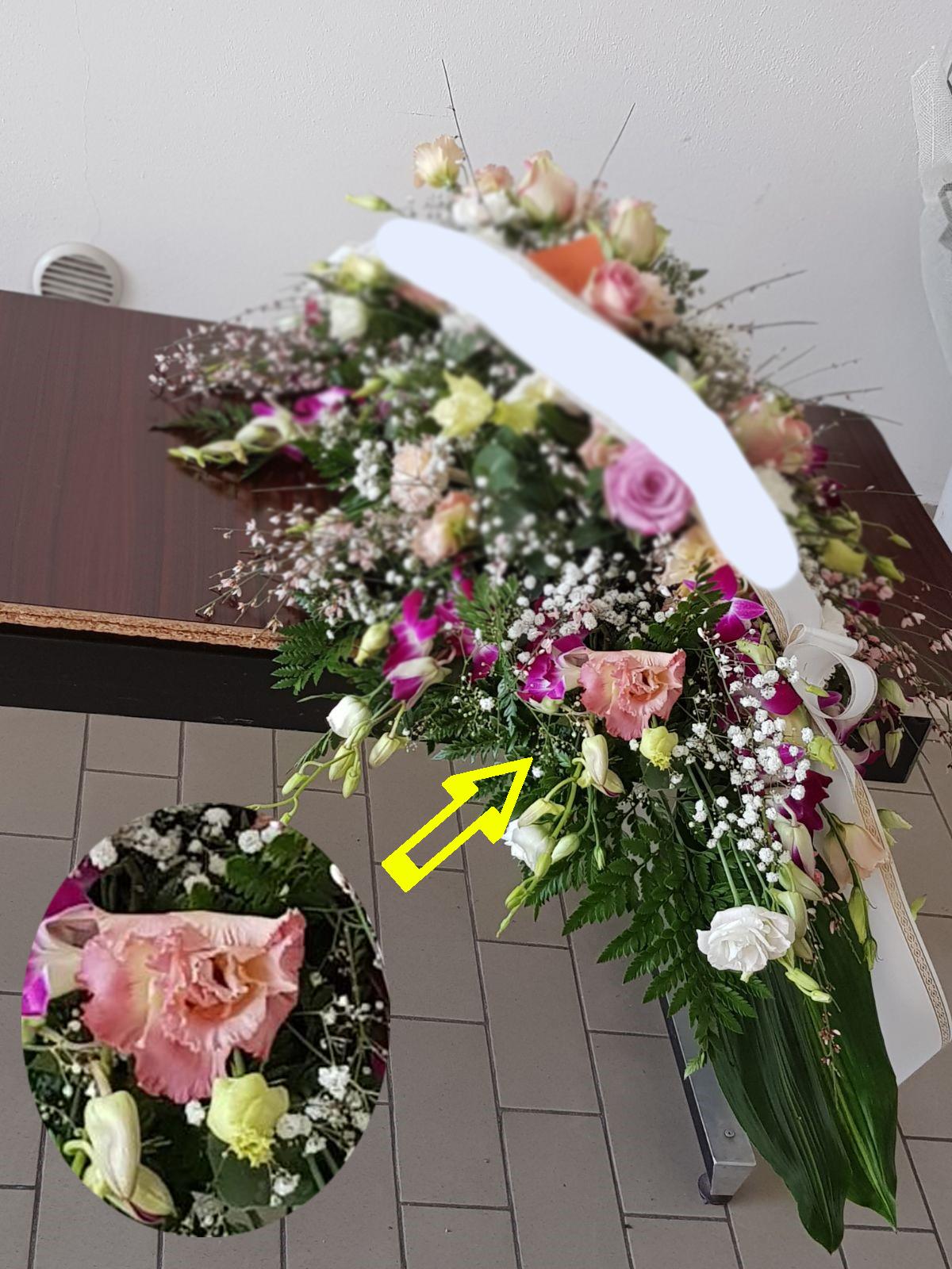 fiori marci
